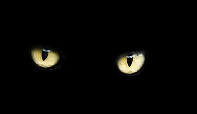 przep-eyes